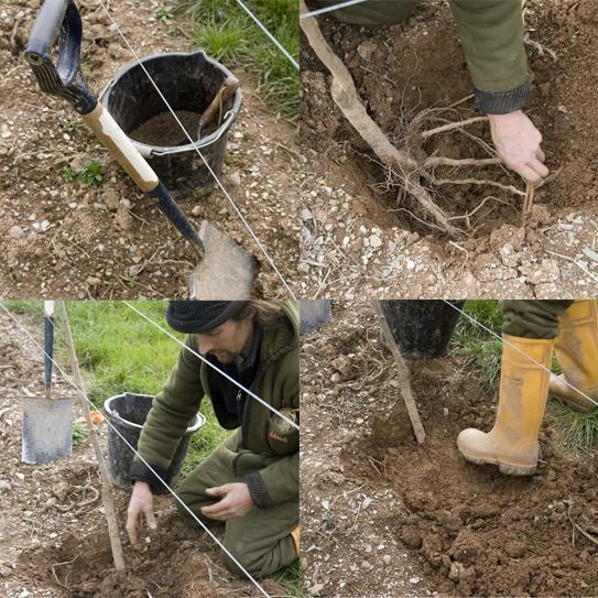 plum-trees-planting.jpg