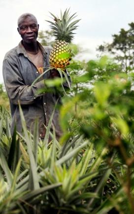 fair-trade-pineapple1