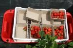 strawberries from Devon