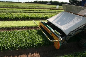 organic salad pack from Riverford Farm in Devon