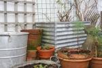 gardening blog - Penny's Gardening Blog