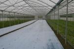 Ed's Organic Farm Blog