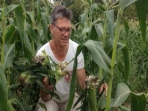guy corn smut landscape